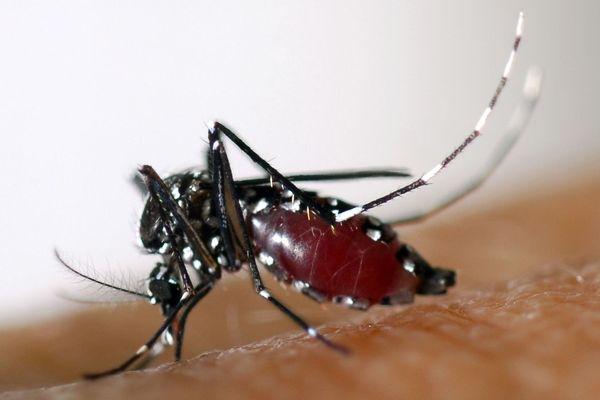L'Aedes albopictus, plus communément appelé moustique tigre, est apparu dans les Alpes-Maritimes en 2004 et n'a cessé de se développer depuis.