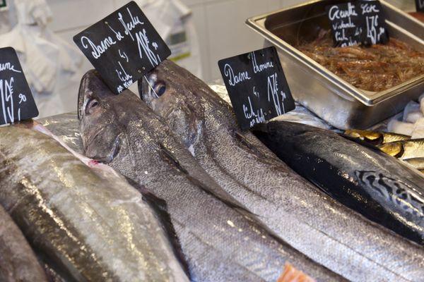 Le merlu est l'une des espèces qui se trouvent sous pression d'une surpêche en Méditerranée, pointe l'Ifremer (image d'illustration).