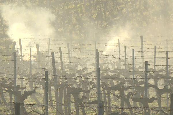 Dans les côtes de Bourg en Gironde, ce jeudi matin 8 avril. Les fumées se dégagent des rangs de vignes et se dispersent alentours.