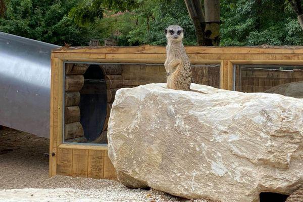 La Vallée des signes accueille désormais des suricates dans un espace conçu pour les enfants.