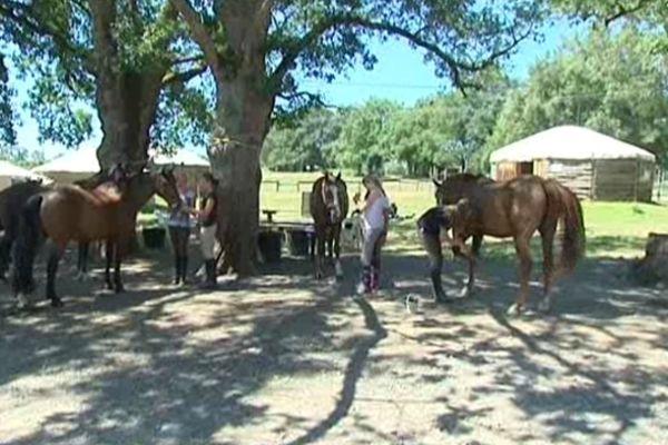 Meilleur Centre Equestre de France