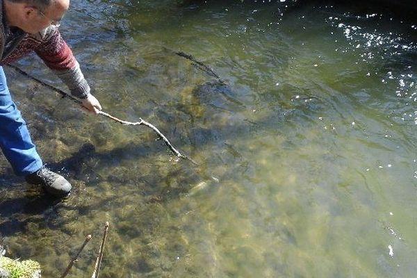 De nombreux poissons morts dans la Couze Pavin suite à deux pollutions consécutives de la rivière.