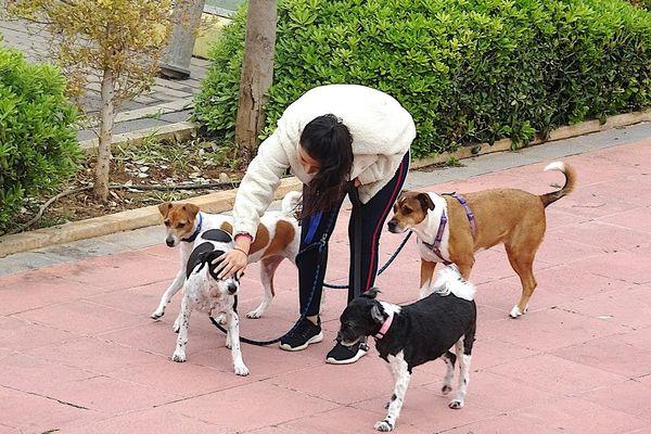 Les bénévoles se proposent de promener les chiens des soignants.