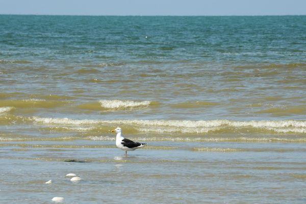 Bel ensoleillement en bord de mer pour ce dernier après-midi du mois d'août