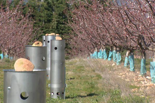 Des dispositifs pour préserver les arbres fruitiers du gel