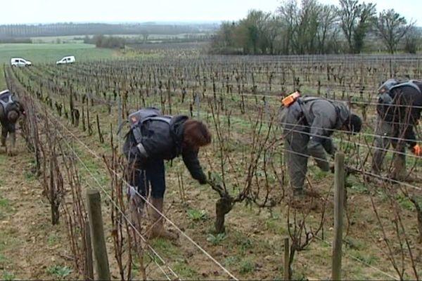Le vignoble de Menetou-Salon dans le Cher, le 5 février 2016.
