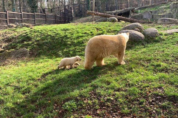 Kara et sa maman au parc zoologique de Mulhouse le jeudi 25 février.