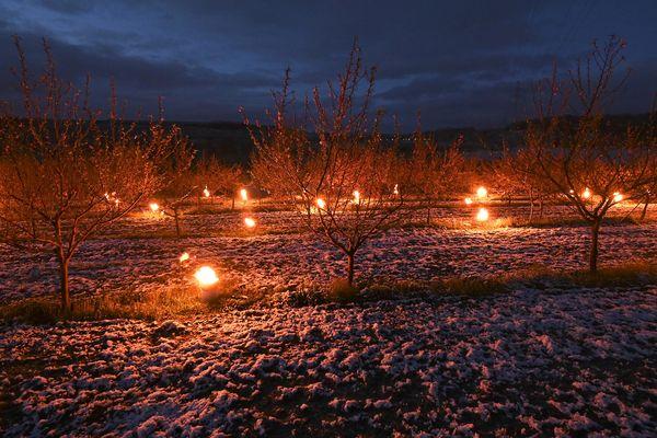 Pour lutter contre le gel, les arboriculteurs peuvent allumer des bougies anti-gel auprès de leurs arbres.
