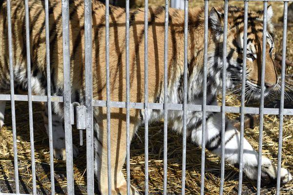 Le maire du Luc, dans le Var, ne veut pas de cirques avec animaux sauvages sur sa commune.
