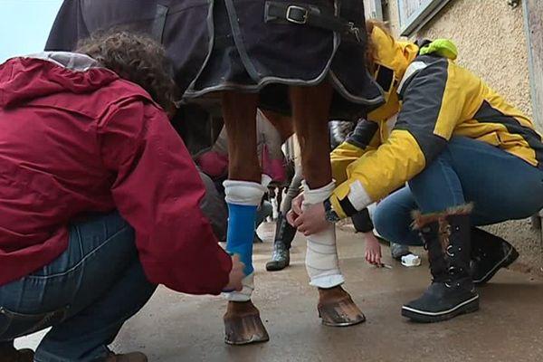 La société Classequine à Nîmes propose via des ateliers l'apprentissage des premiers secours pour vos chevaux - 14 février 2017