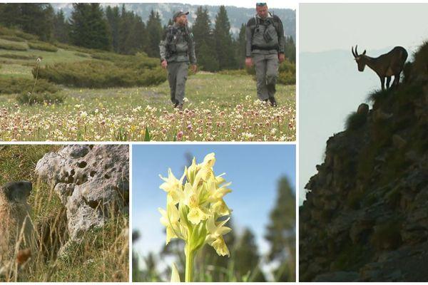 Les gardes de la réserve naturelle des hauts plateaux du Vercors font de la prévention pour le premier week-end de déconfinement.