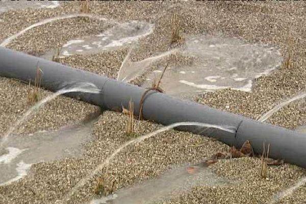 Les roseaux sont encore petits. Dès l'été prochain, ils contribueront à dégrader les matières biologiques présentes dans les eaux rejetées par l'usine.
