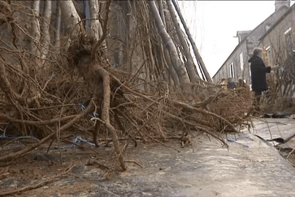 Des arbres proposés à la vente lors de la foire Sainte-Catherine de Briouze (61)