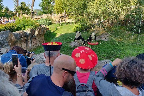 Yuan Meng, le panda de Beauval fête ses 2 ans !