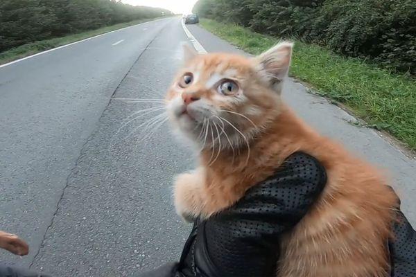Le chaton couché sur une voie d'autoroute