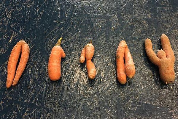 Biscornues, ces carottes permettent, tout de même de faire de bons petits plats.