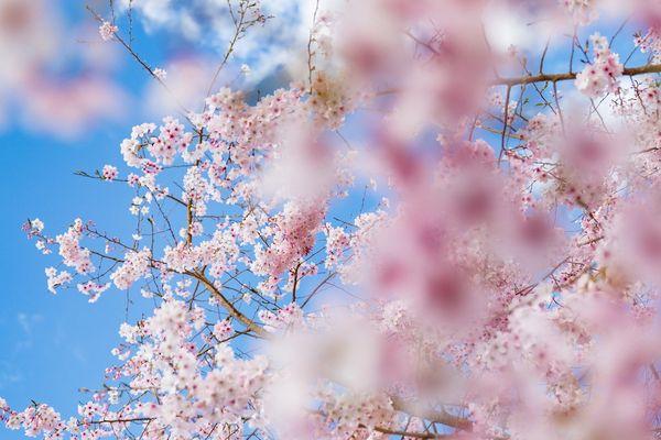 Un début de printemps bien frisquet!