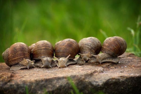 La 36e foire aux escargots a lieu à Boisseuil ce week-end du 11 et 12 septembre