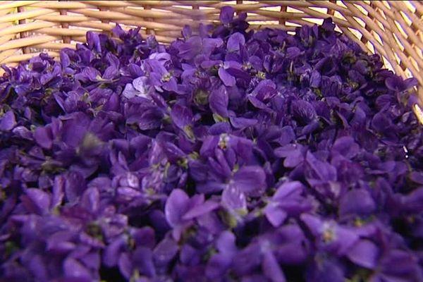 A Tourrettes-sur-Loup, la famille Coche cultive la fleur sous serres et hors-sol