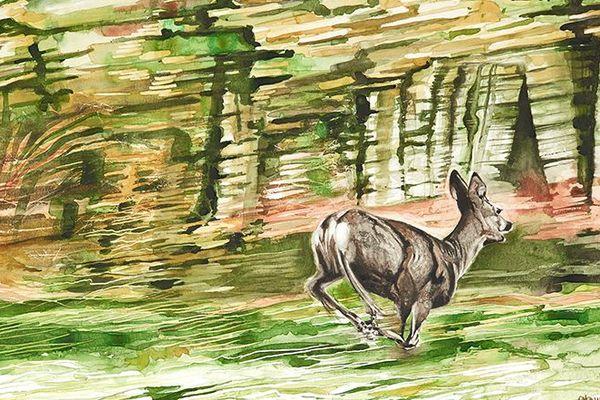 Aquarelle de Christian Daché : chevreuil en fuite