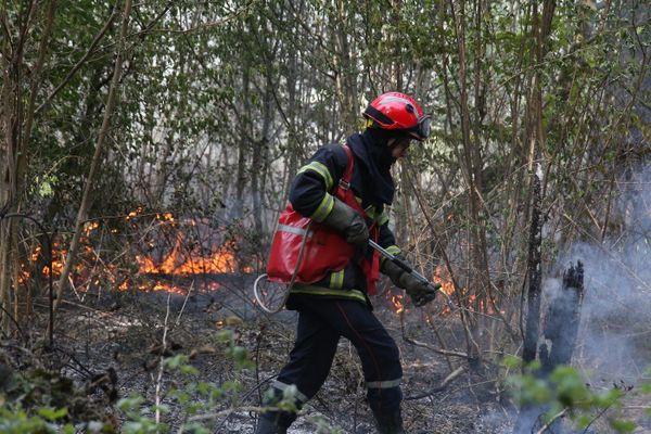 illustration d'un feu de forêt