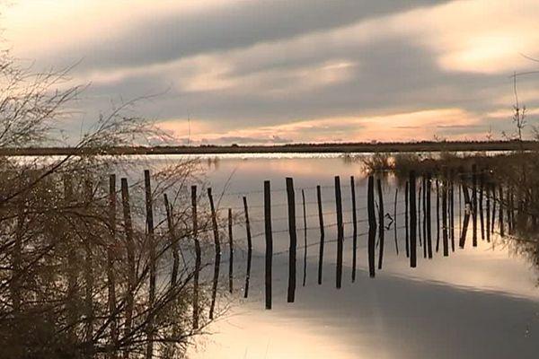 Tout près de Montpellier, la petite Camargue abrite ce milieu lagunaire, où les communes se situent à 1m50 au dessus du niveau de la mer. Candillargues, décembre 2018.