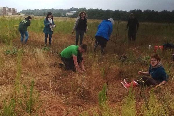 Une vingtaine de membres d'Extinction Rebellion ont planté, ce mardi 30 juin, un potager sur ce qui doit devenir site de construction de Tropicalia, près de Berck, dans le Pas-de-Calais.