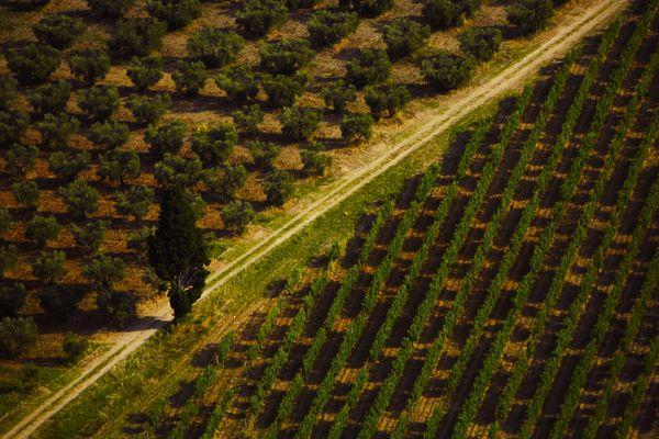 Vue aerienne de champs de vignes et d'oliviers dans les Alpilles