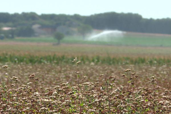 Alerte à la sécheresse en Poitou-Charentes