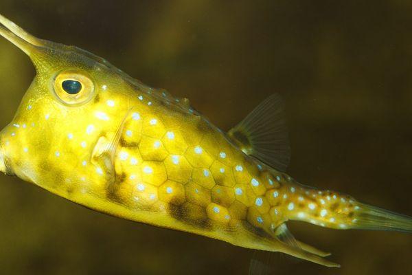 Les poissons de l'Aquarium du Limousin attendent le retour des visiteurs avec impatience !