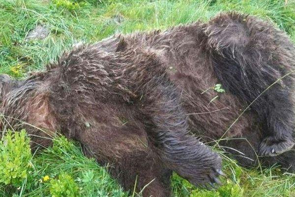 L'ours a été découvert le 9 juin