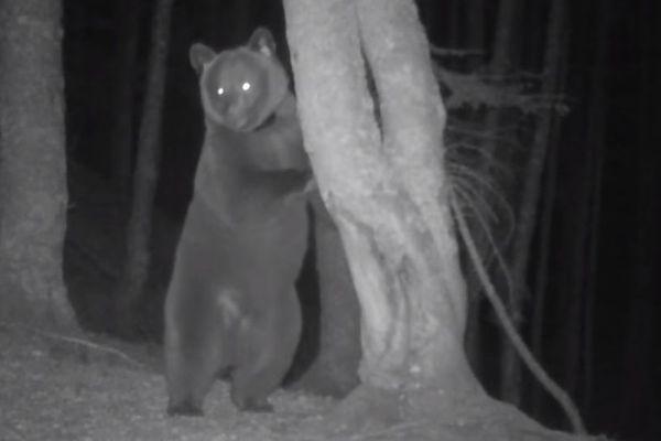 Les premières images de l'ourse Sorita.