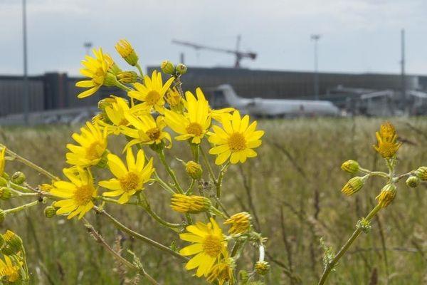 352 espèces végétales, 89 espèces d'oiseaux, 15 espèces de mammifères et 42 espèces de papillons sont répertoriées sur le site de l'aéroport de Toulouse-Blagnac.