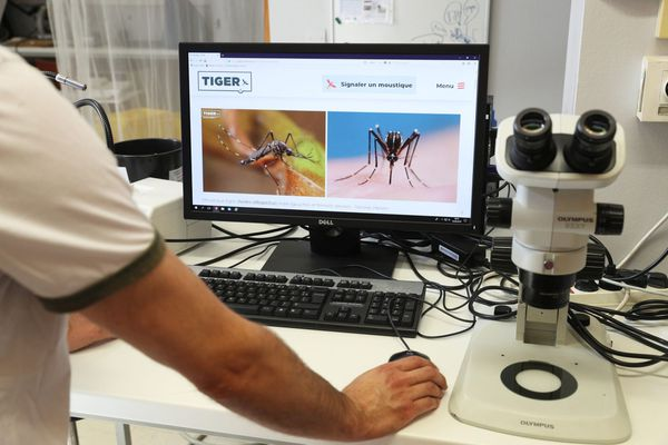 Le Docteur Bruno Mathieu responsable de l'équipe Entomologie Medicale de l'IPPTS ( Institut de Parasitologie et de Pathologie Tropicale de Strasbourg ) , coordinateur du projet Tiger à l'Université de Strasbourg montre des photos permettant l'identification du moustique Tigre.