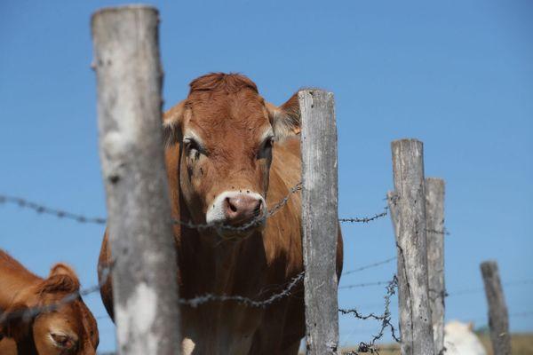 Les éleveurs et éleveuses de l'AALVie (Abattage des Animaux sur leur Lieu de Vie) lancent un financement participatif pour développer des abattoirs mobiles à la ferme