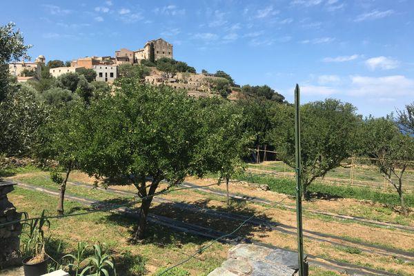 Au quatre coins de la Corse, les initiatives se multiplient pour proposer de découvrir l'île à travers des activités agricoles et rurales.