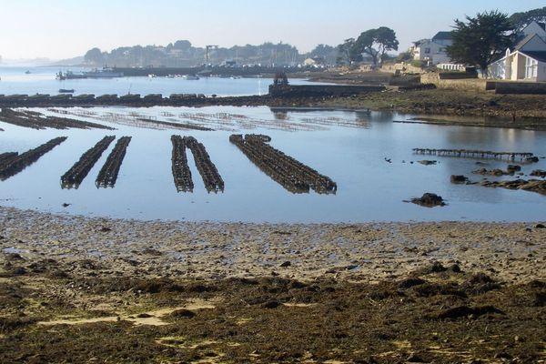 Parc à huîtres au petit jour dans le Golfe du Morbihan