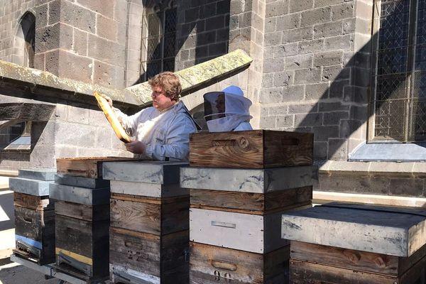 Dix ruches sont installées sur le toit de la cathédrale de Saint-Flour dans le Cantal.