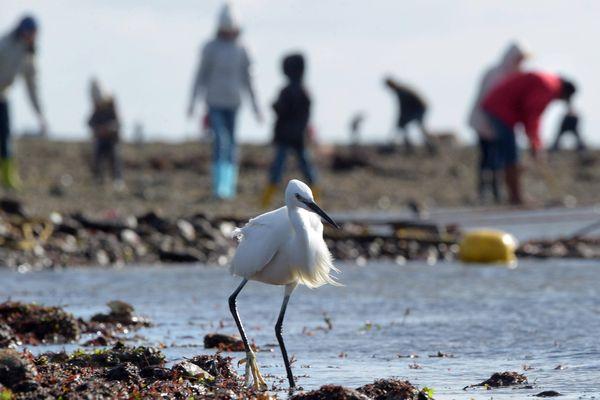 Nombreuses sont les espèces et les activités en Petite mer de Gâvres.