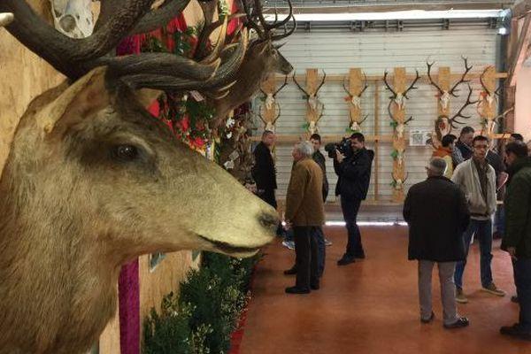 708 trophés exposés à la Maison de la chasse de Thilouze (Indre-et-Loire). Un record !