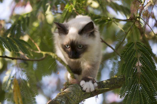 Les jeunes chats adorent explorer