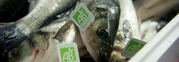 Le loup de la ferme Provence Aquaculture, première ferme à être certifiée BIO en 2002
