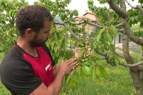 En pleine pandémie de Covid-19, Stéphane Micanel, arboriculteur dans les Hautes-Alpes, espère sauver sa récolte grâce à un coup de pouce du département.