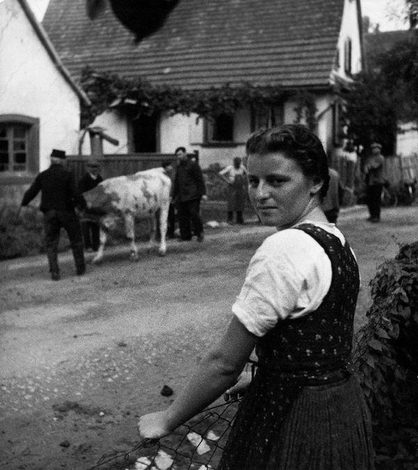 Vente de vaches à Oberseebach