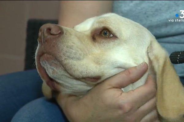 Corse : attention à la leishmaniose chez le chien