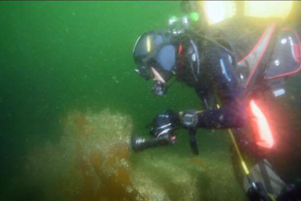 des archéologues plongeurs, à la découverte d'une épave
