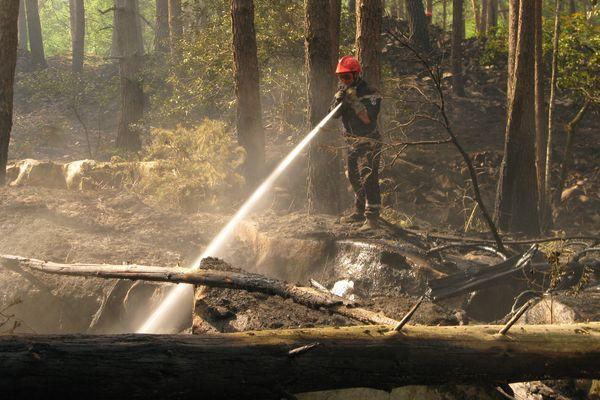 Malgré le confinement, les pompiers ont dû intervenir dans la forêt de Fontainebleau pour éteindre des feux liés à l'activité humaine. (Illustration)