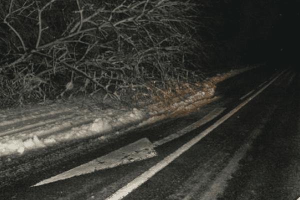 Un arbre sur la chaussée, près d'Hirson dans l'Aisne, samedi 27 décembre.