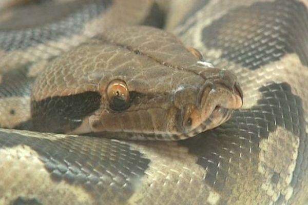 Seuls des reptiles inoffensifs étaient présentés à Saint-Aquilin-de-Pacy