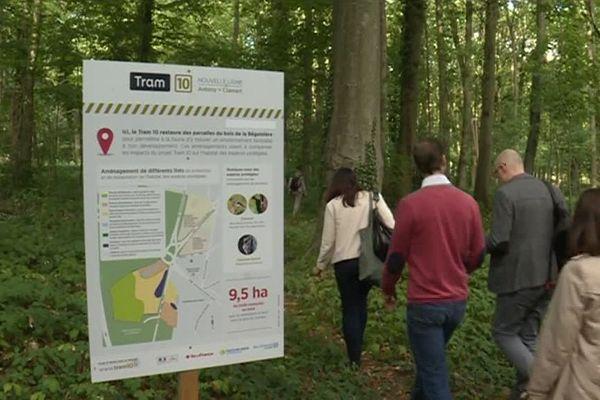 Le futur tram T10 traverse un petit bois à Chatenay-Malabry (Hauts-de-Seine). Il sera reboisé à quelques dizaines de mètres.